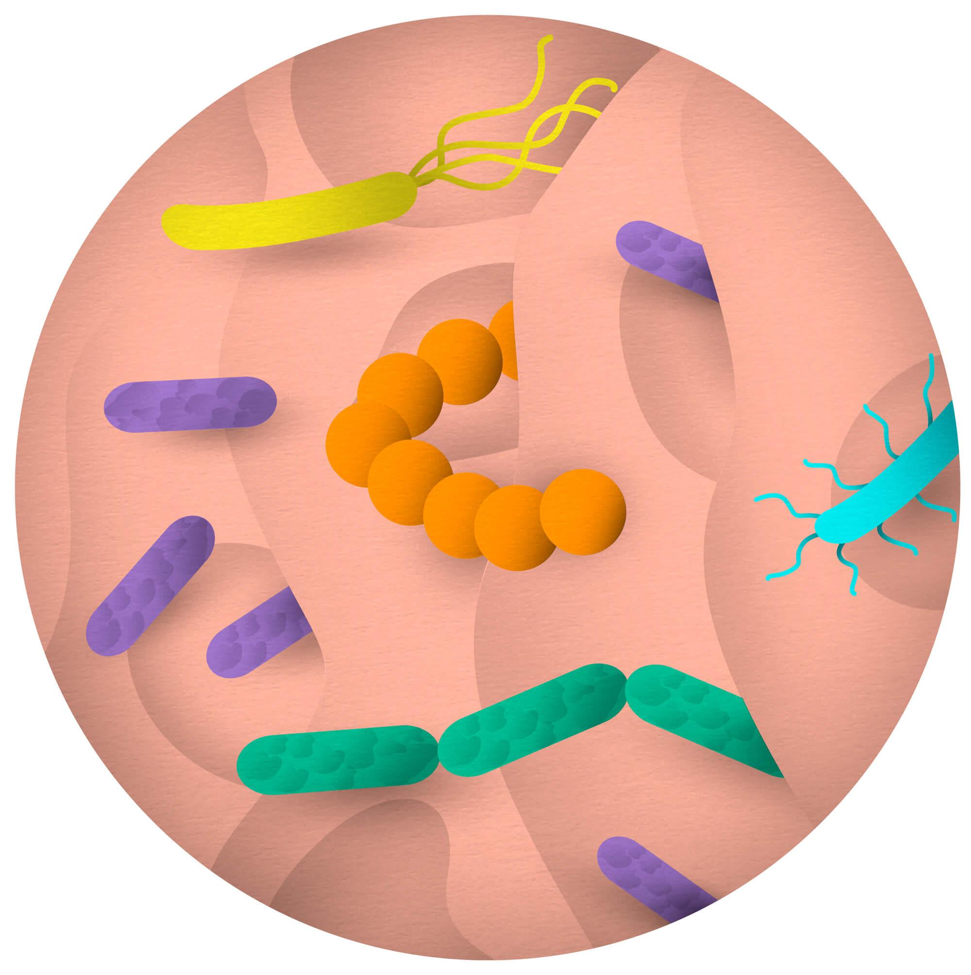 bacteria_vigo_illustration_katrinrodegast_web